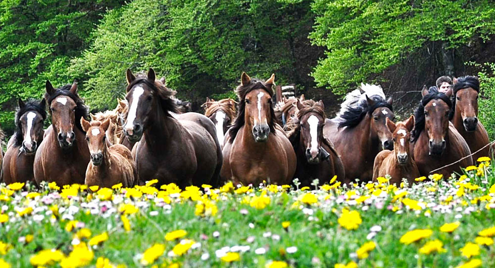 EkoLanda Sorogain caballos